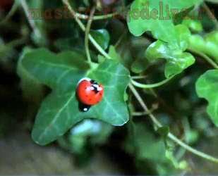 Видео мастер-класс по флористике: Декорирование домашних растений