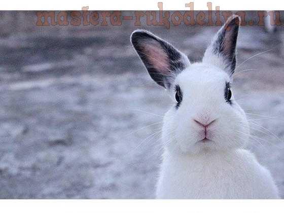 Фетр или войлок — бобр или кролик? или Почему у Безумного Шляпника рыжие волосы