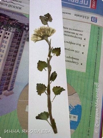 Как сделать бумагу из листьев своими руками самым простым способом