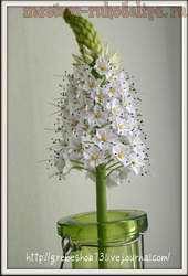Мастер-класс по керамической флористике: Эремурус