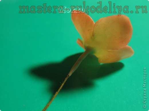Мастер-класс по керамической флористике: Гортензия